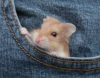 Got a mouse in your pocket.png